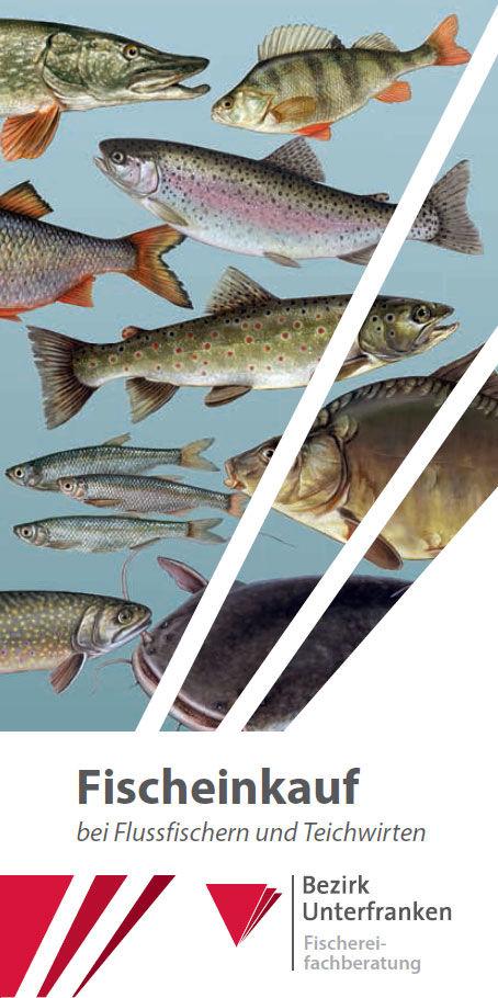 Titelbild_Fischeinkauf
